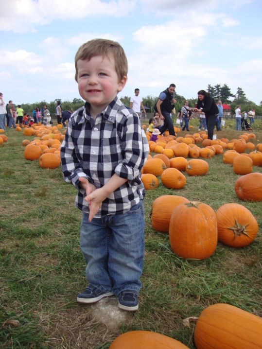 toddler, pumpkin patch