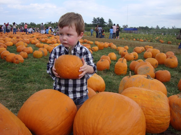 toddler in pumpkin patch